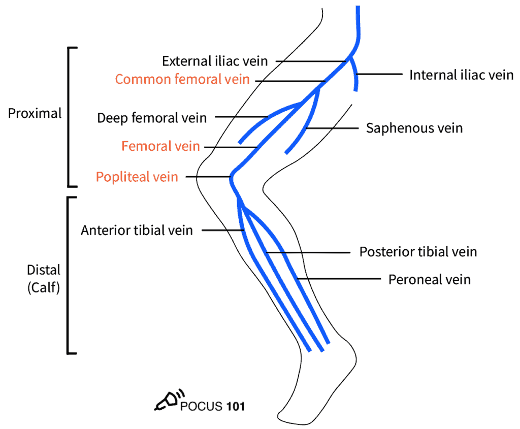 DVT Ultrasound Lower Extremity Veins